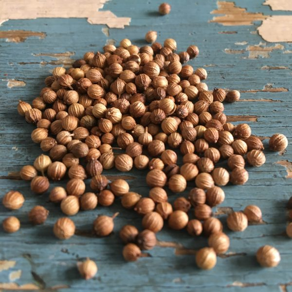 Coriandolo semi