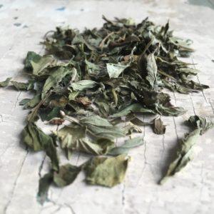 Melissa foglie