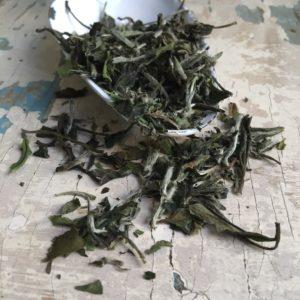 Tè bianco Pai Mu Tan