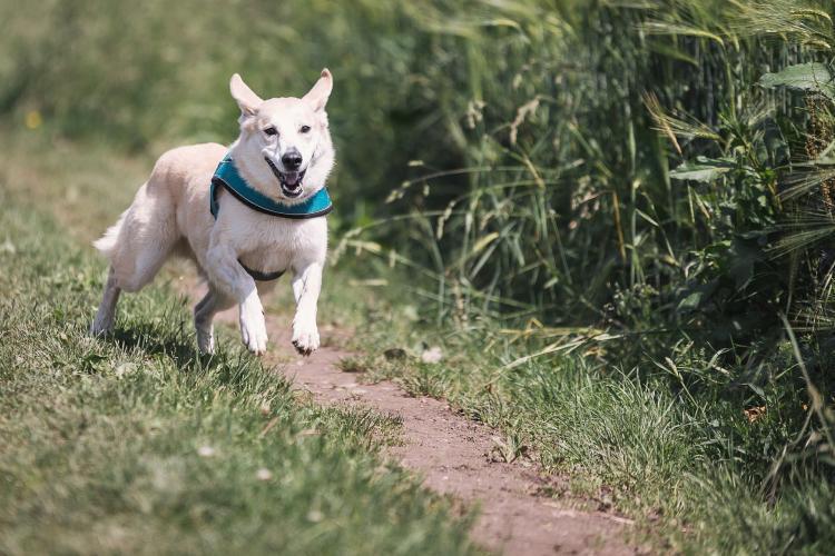 cane che corre all'aria aperta